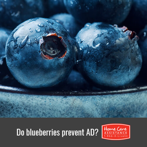 Can Blueberries Prevent the Onset of Alzheimer's in Dallas, TX?